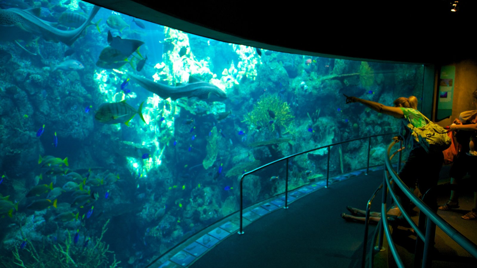 Aquário do Pacífico caracterizando vida marinha e vistas internas
