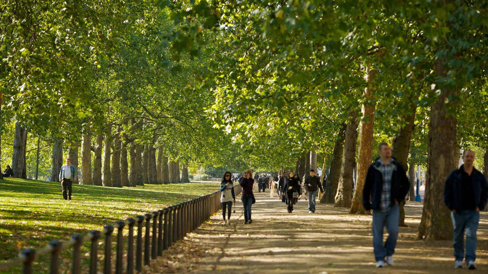 St. James Park featuring a park