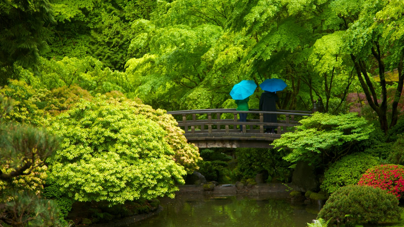 Portland Japanese Garden showing forest scenes, a bridge and a garden