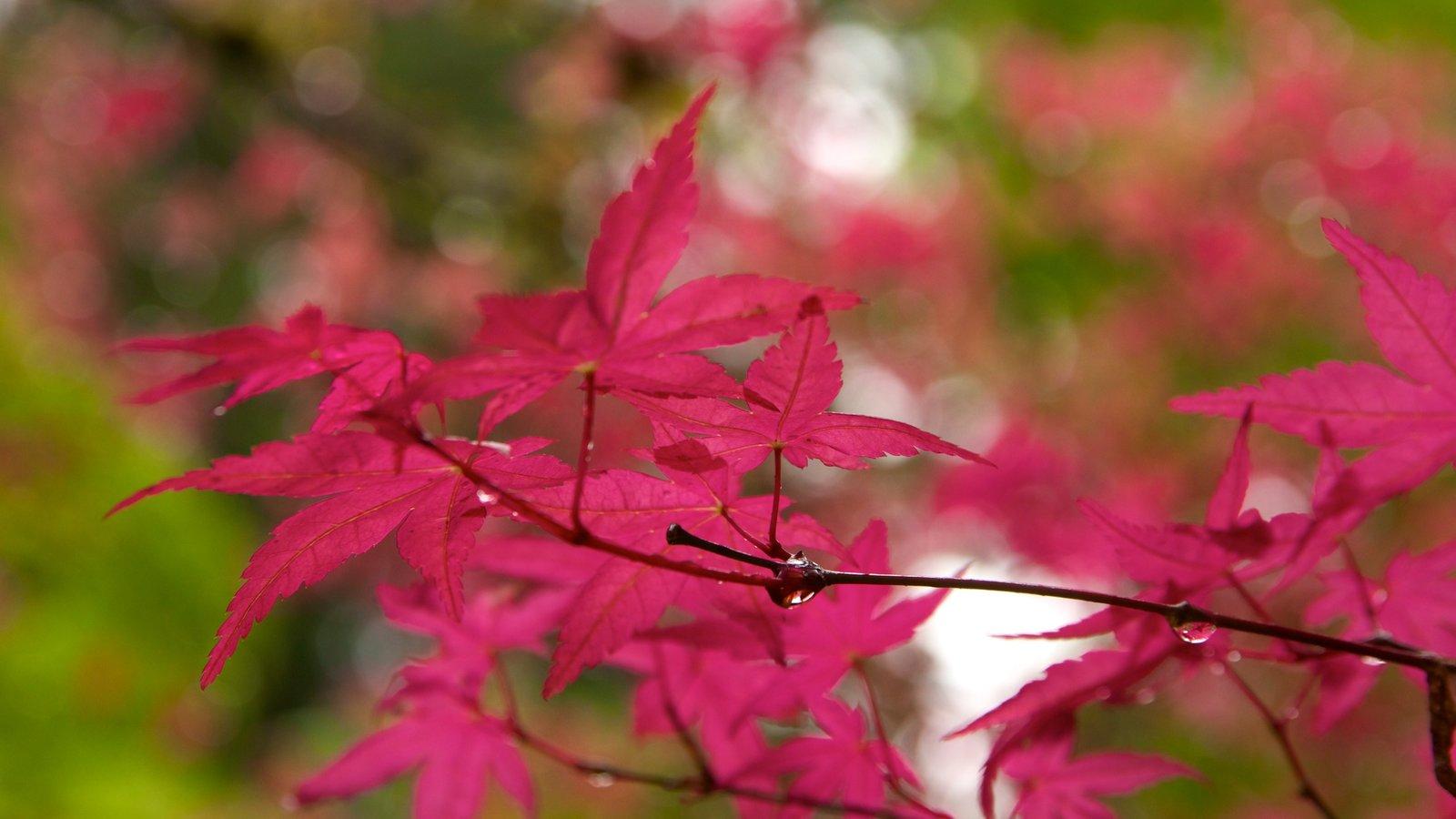 Jardín Japonés de Portland mostrando un jardín