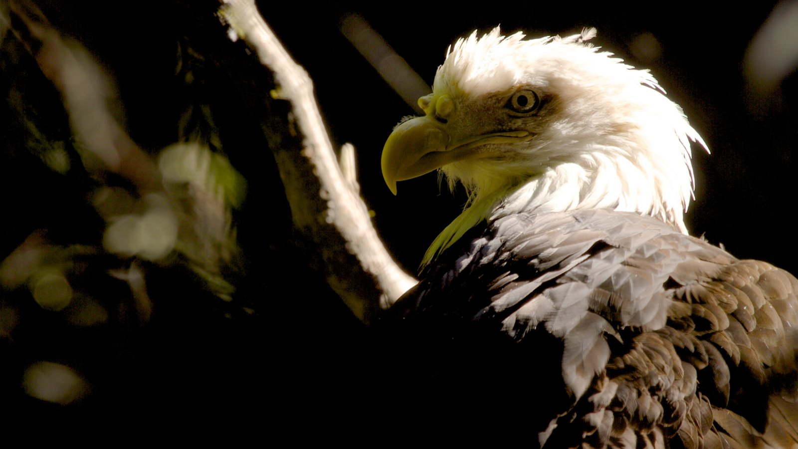Oregon Zoo featuring bird life and zoo animals