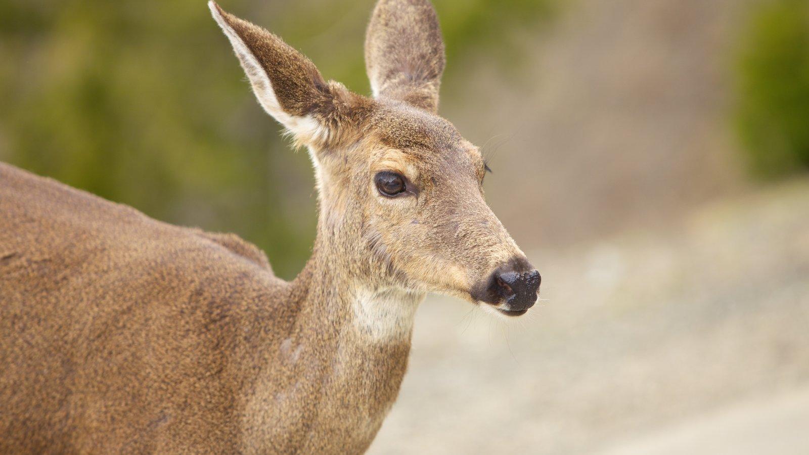 Olympic National Park caracterizando animais de zoológico e animais fofos ou amigáveis