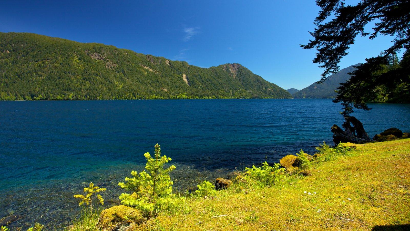 Parque Nacional Olympic que incluye vistas de paisajes, un lago o abrevadero y montañas