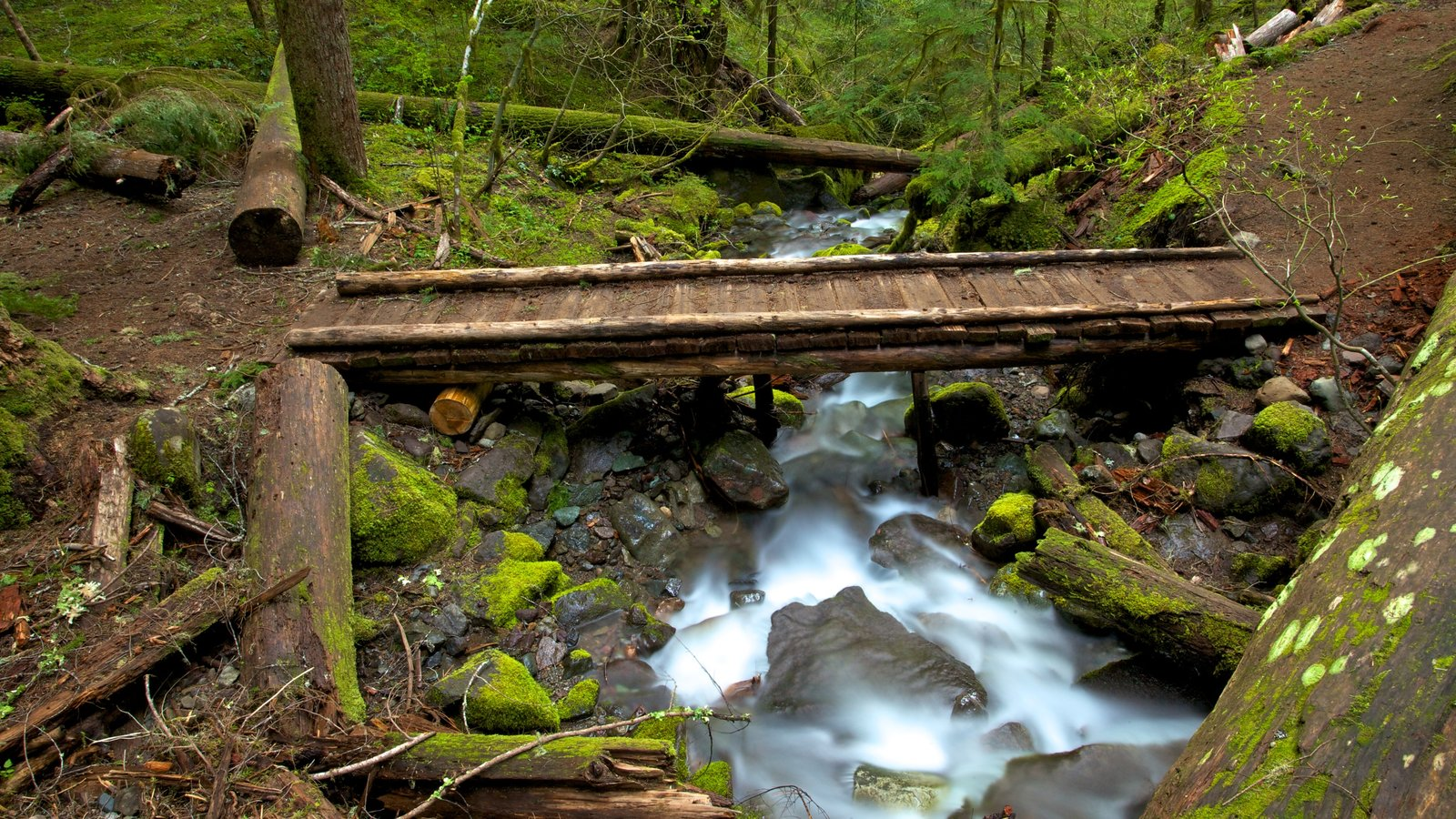 Mount Rainier National Park which includes landscape views, a bridge and a river or creek