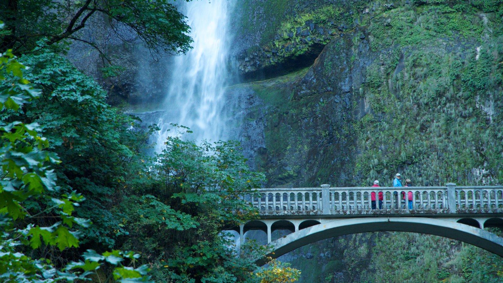 Portland que incluye vistas de paisajes, una cascada y un puente