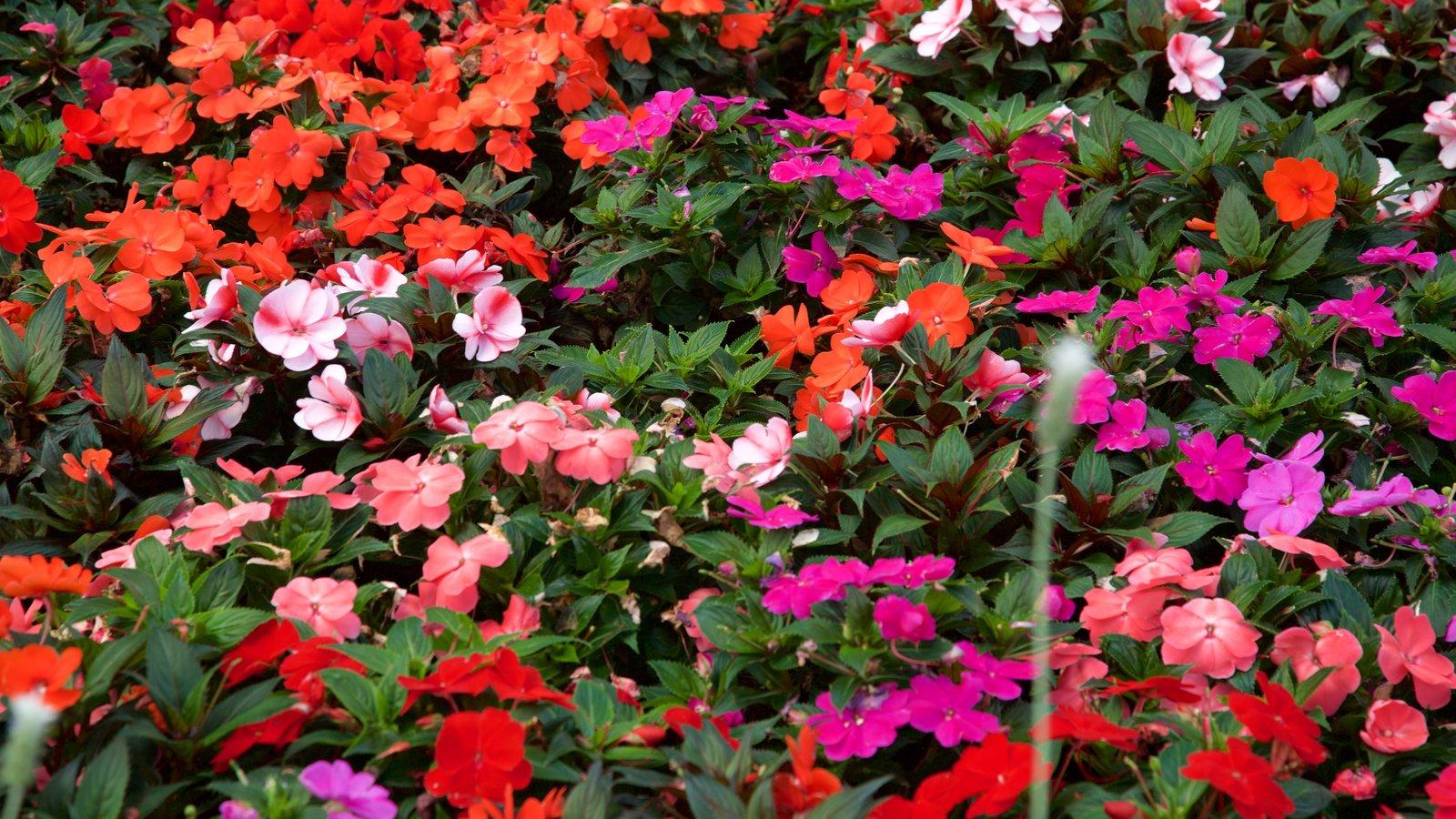 El Cosmovitral mostrando flores silvestres