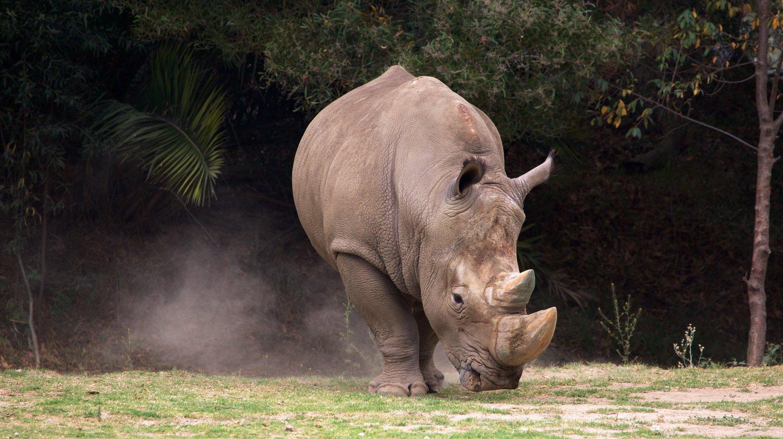 Zoológico Zacango que incluye animales terrestres y animales del zoológico