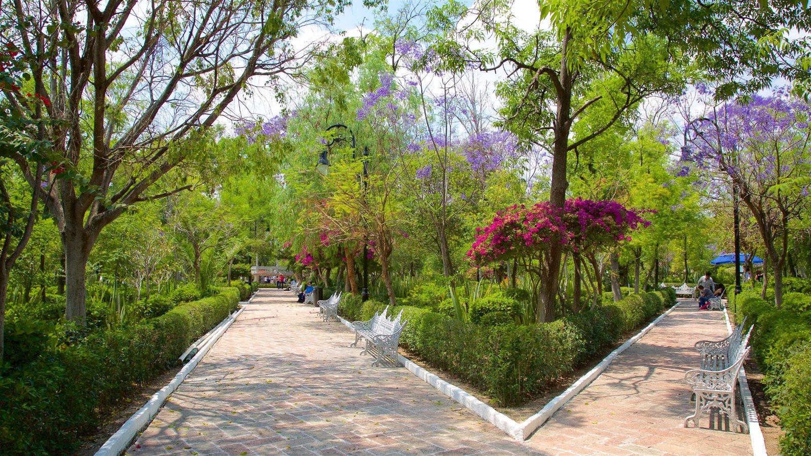 Fotos de Naturaleza: Ver imágenes de Jardín de San Marcos