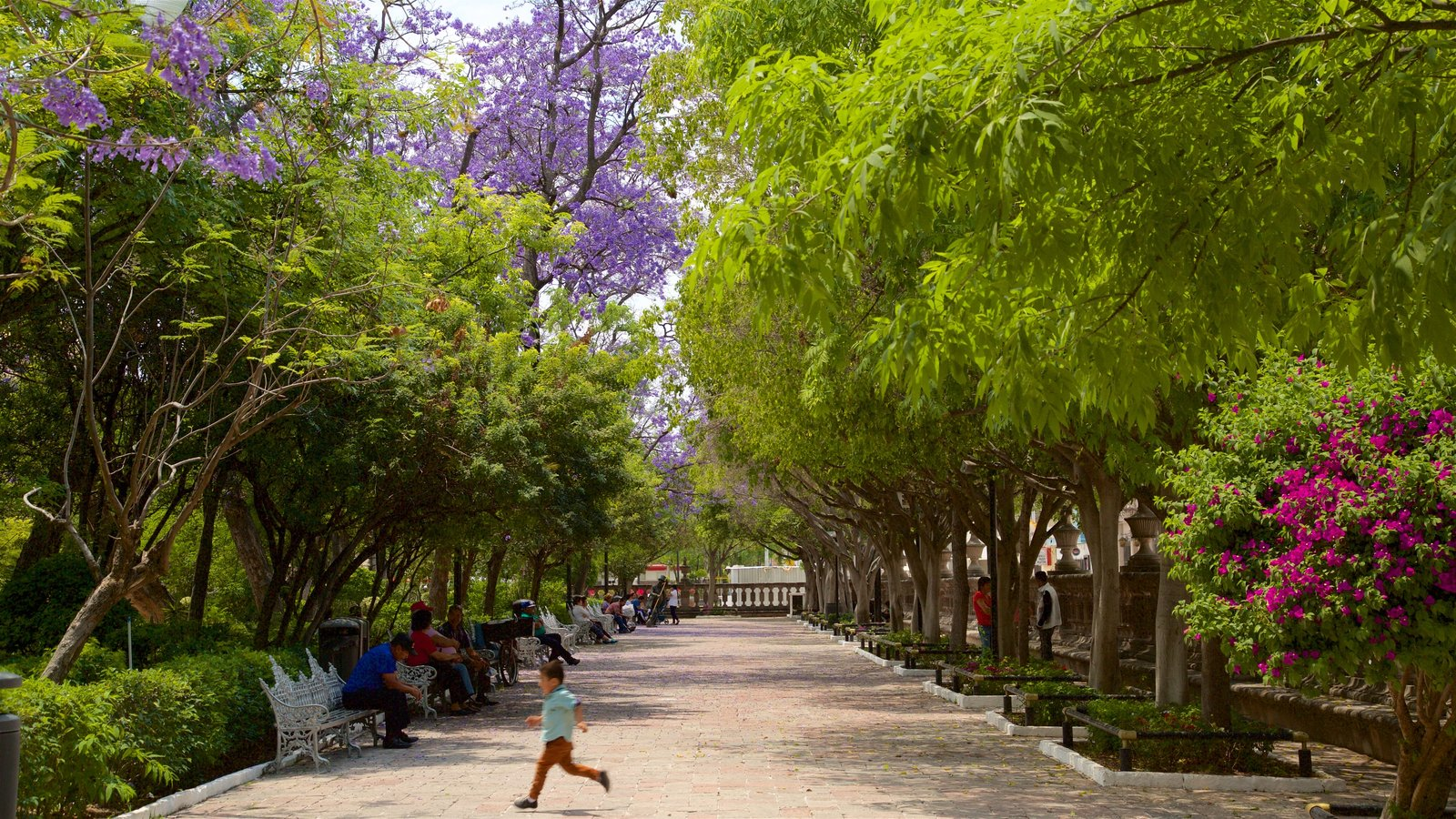 People Pictures: View Images of Jardin de San Marcos