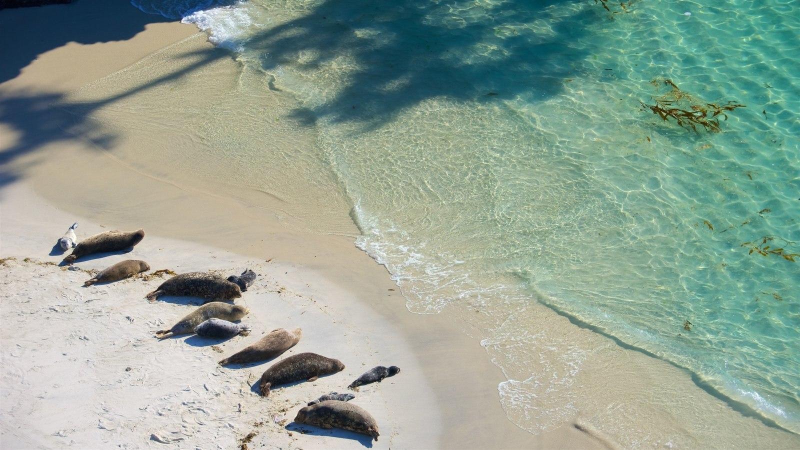 Point Lobos State Reserve mostrando uma praia de areia, paisagens litorâneas e vida marinha