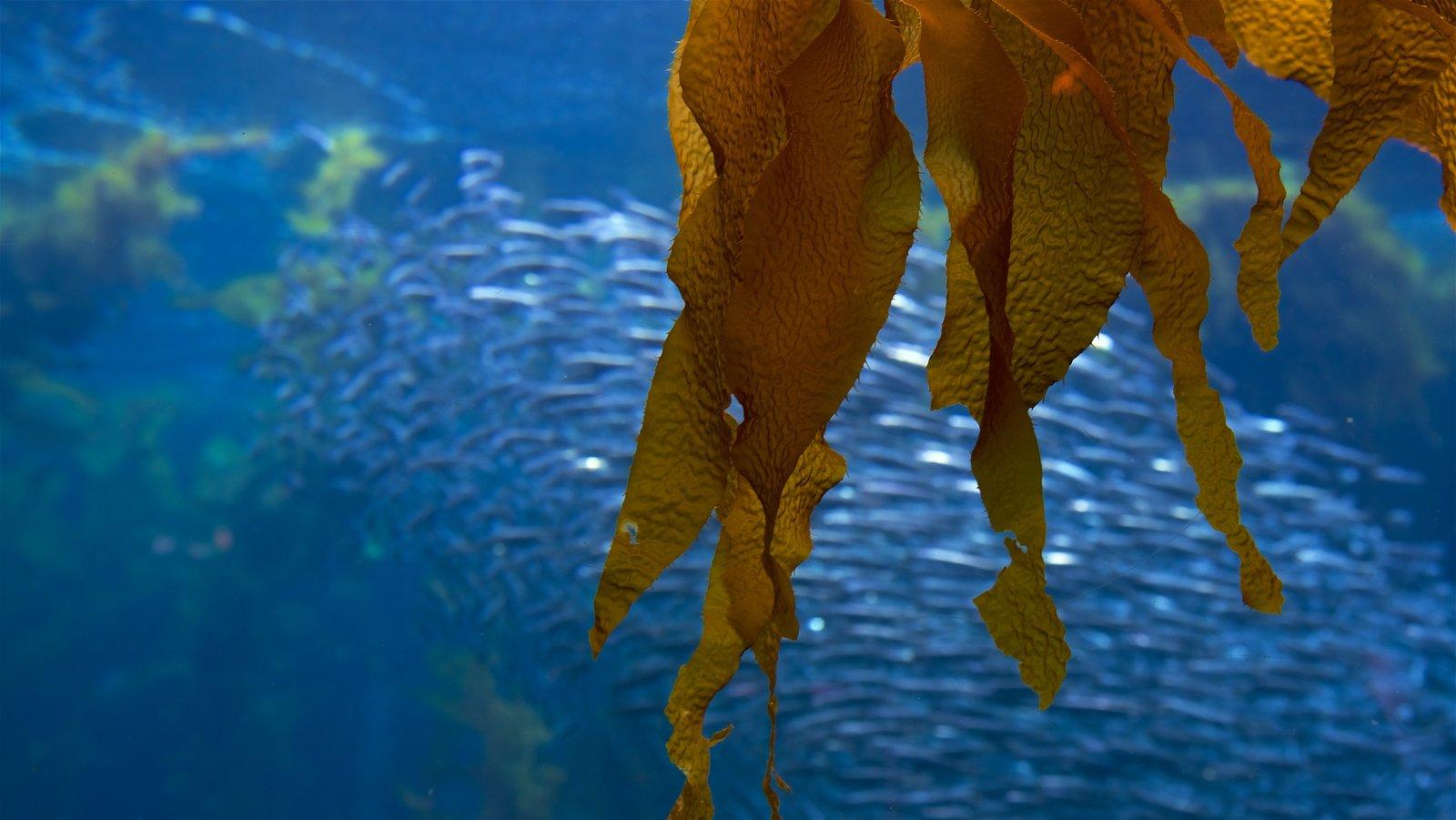 Monterey Bay Aquarium which includes marine life