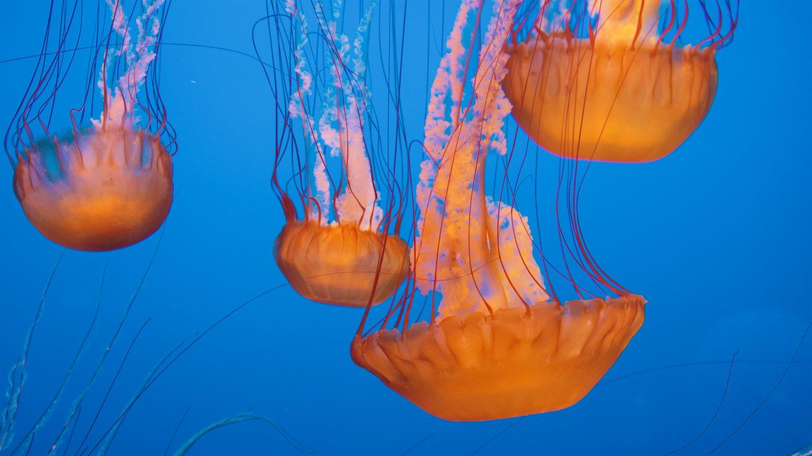 Monterey Bay Aquarium showing marine life