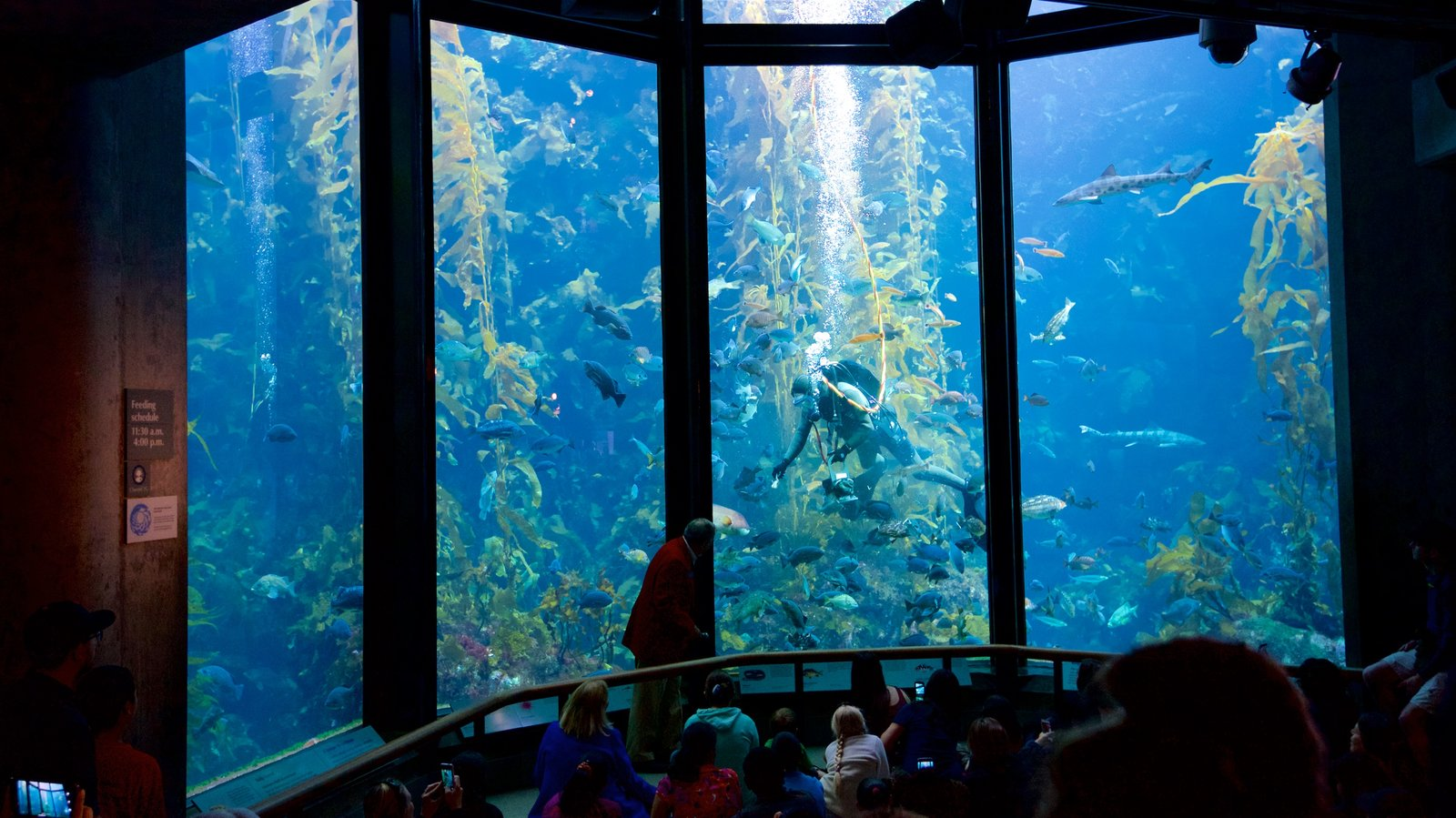 Monterey Bay Aquarium which includes marine life and interior views as well as a large group of people