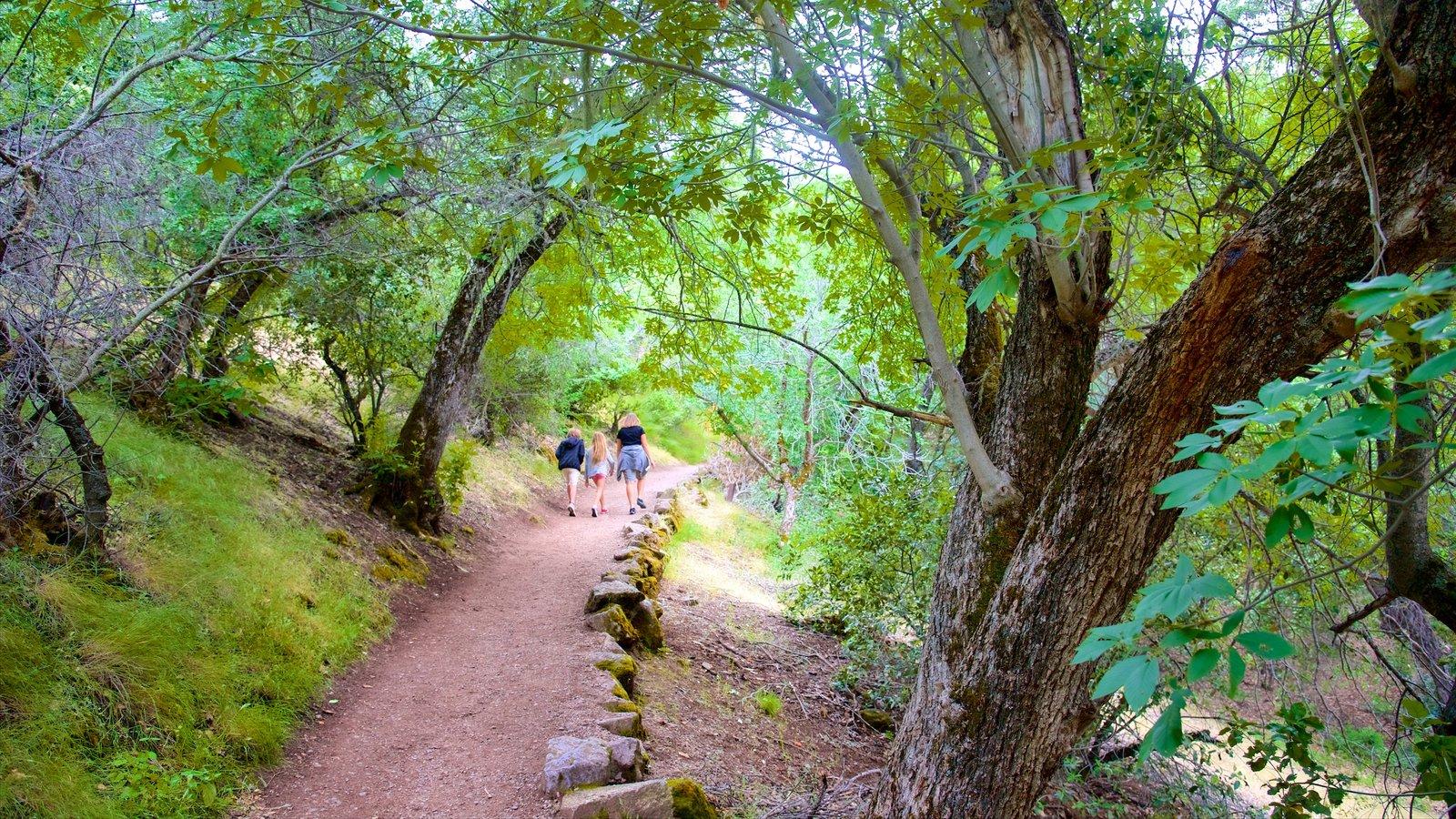 Pinnacles National Park que inclui floresta tropical e escalada ou caminhada assim como um pequeno grupo de pessoas