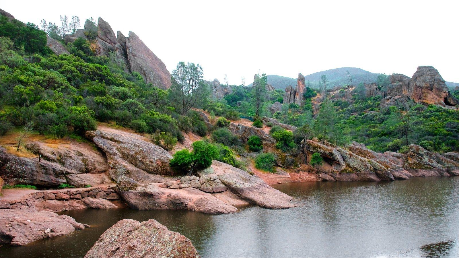 Pinnacles National Park caracterizando um lago ou charco e floresta tropical