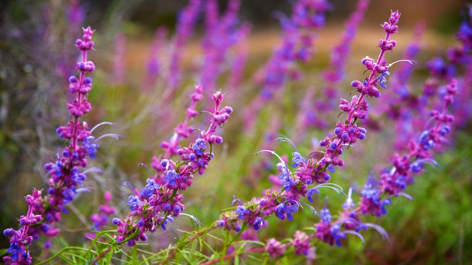 Pinnacles National Park caracterizando flores silvestres