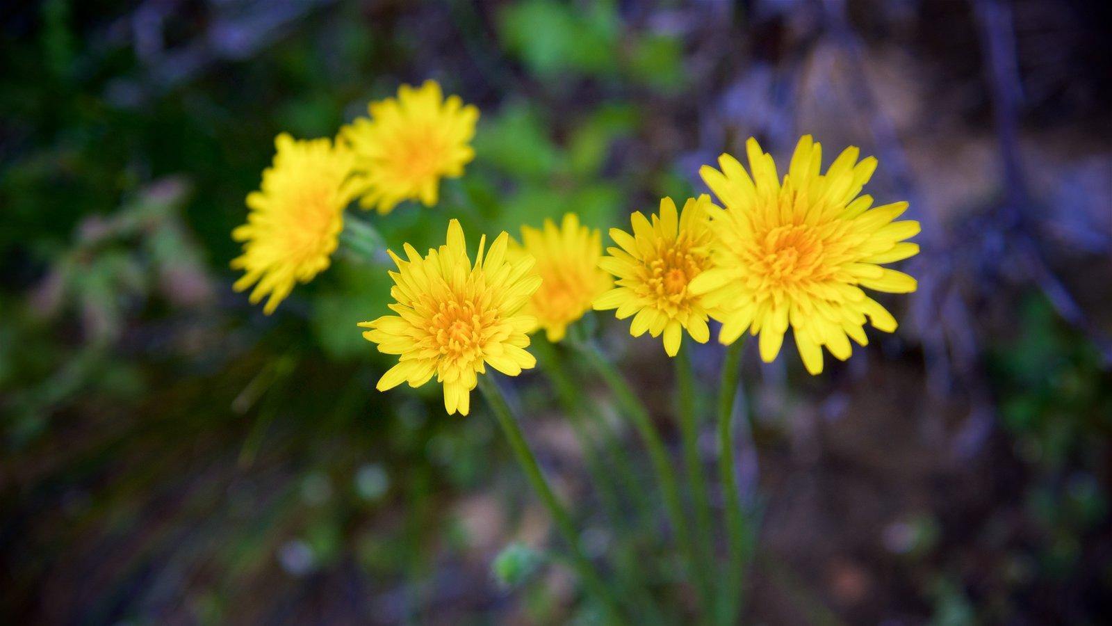 Sequoia National Park mostrando flores
