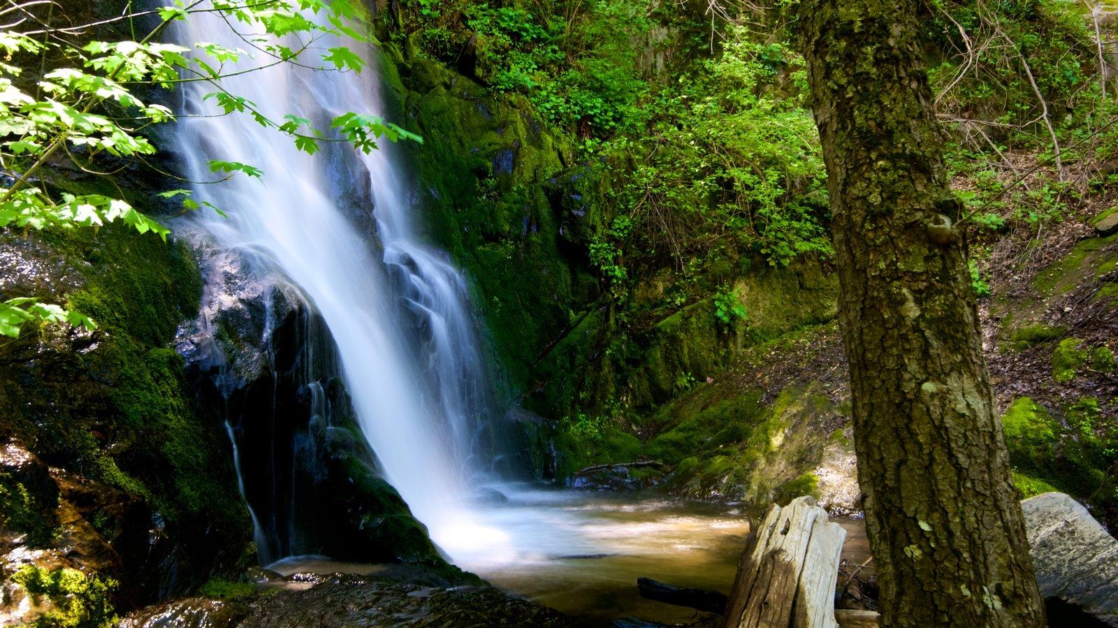Sequoia National Park mostrando uma cachoeira