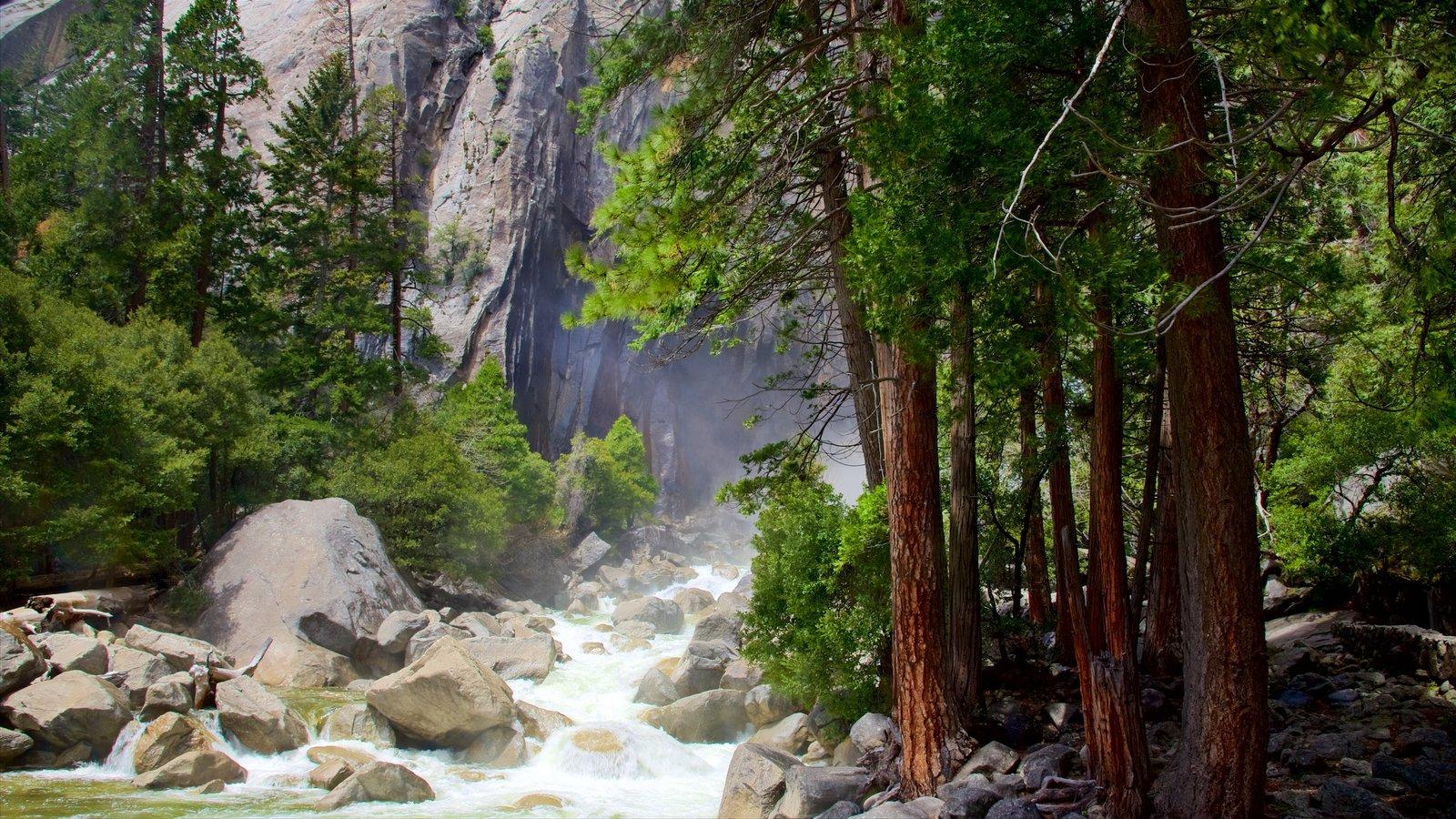 Parque Nacional Yosemite mostrando un río o arroyo y escenas forestales