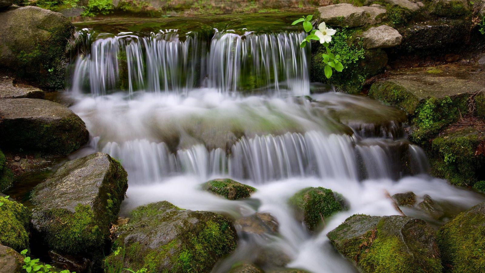 Parque Nacional Yosemite que incluye un río o arroyo