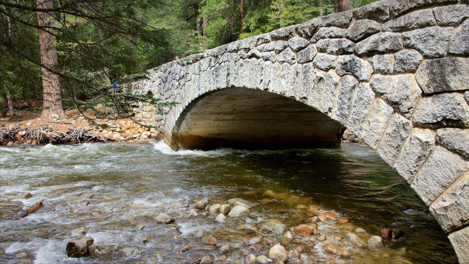 Parque Nacional Yosemite mostrando un río o arroyo, bosques y un puente