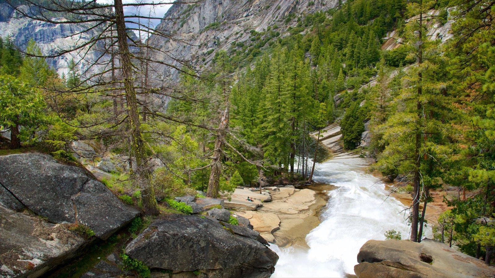 Parque Nacional Yosemite que incluye un río o arroyo, escenas forestales y escenas tranquilas