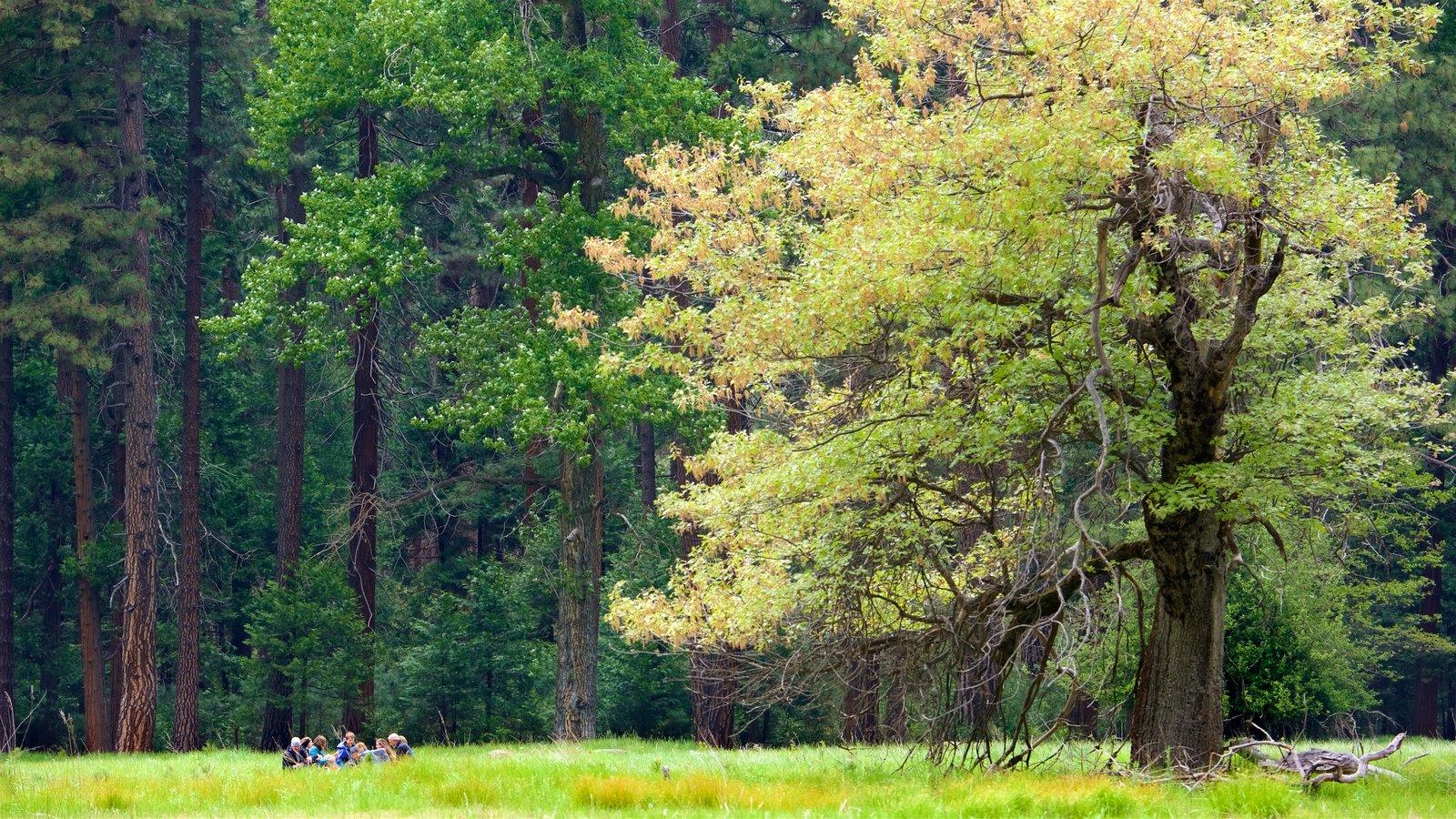 Parque Nacional Yosemite ofreciendo escenas forestales y también un pequeño grupo de personas