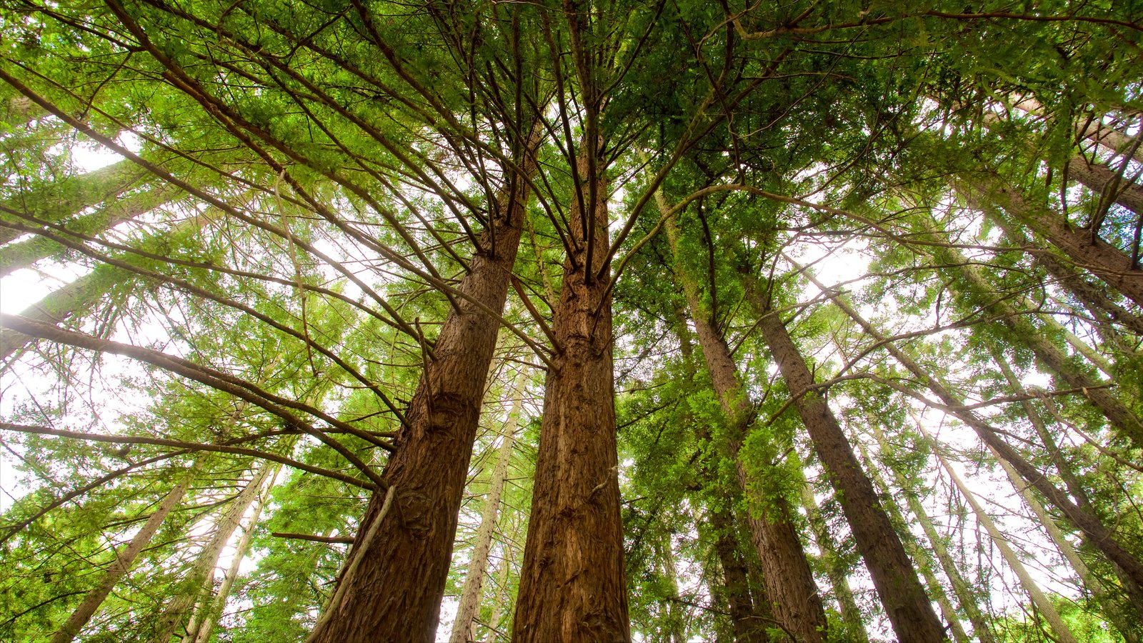 Redwood Regional Park que inclui florestas
