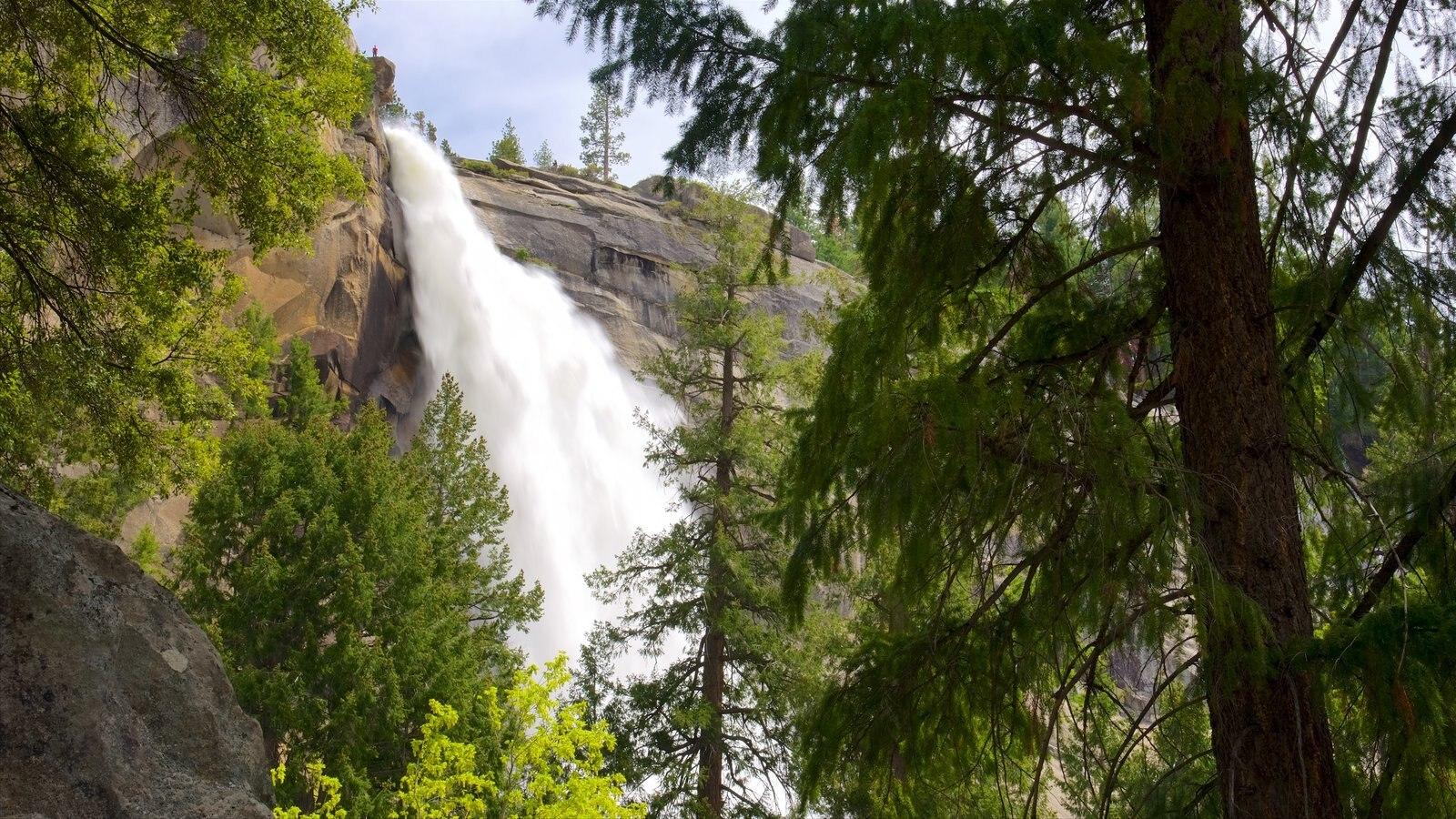 Nevada Falls caracterizando uma cachoeira e florestas
