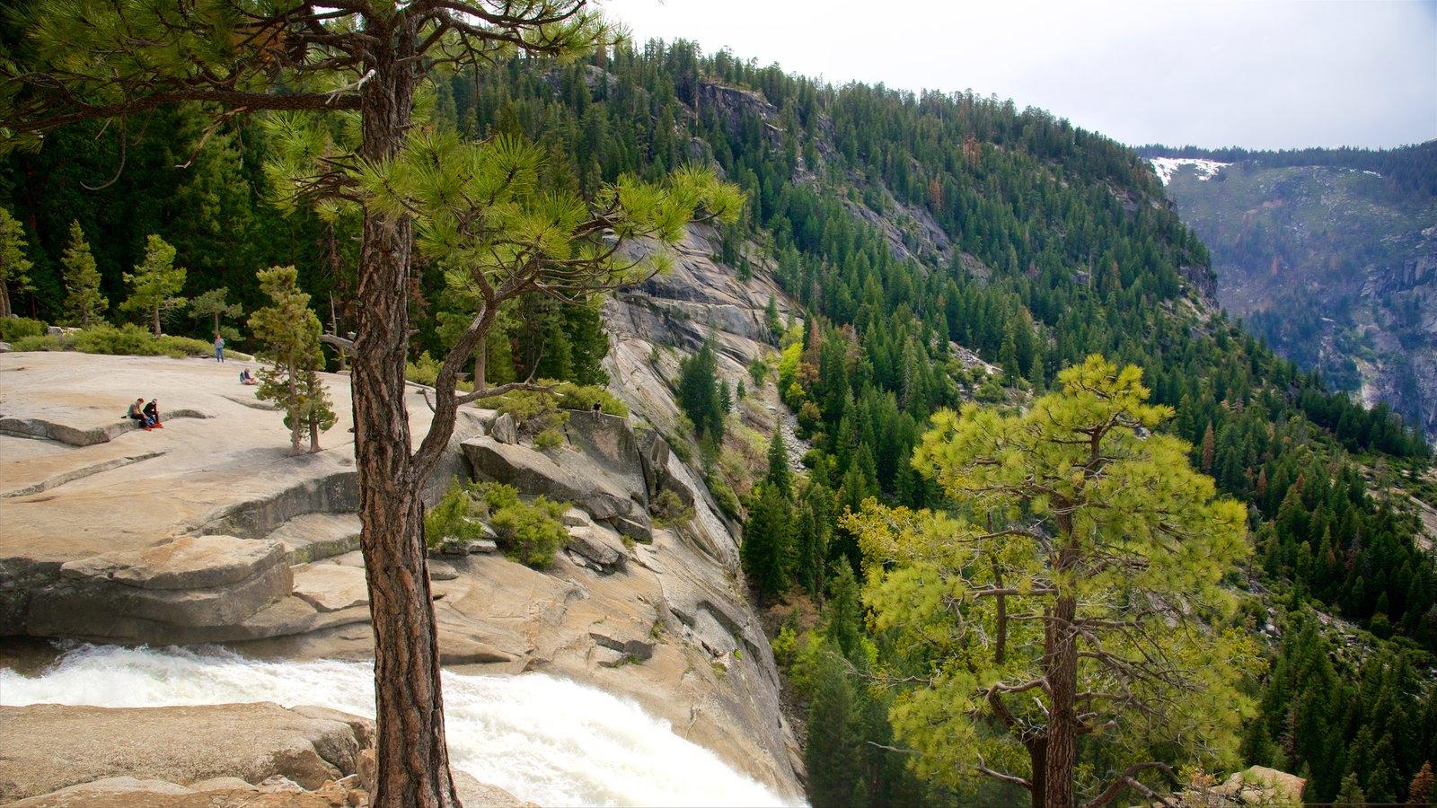 Nevada Falls caracterizando florestas, um desfiladeiro ou canyon e uma cascata
