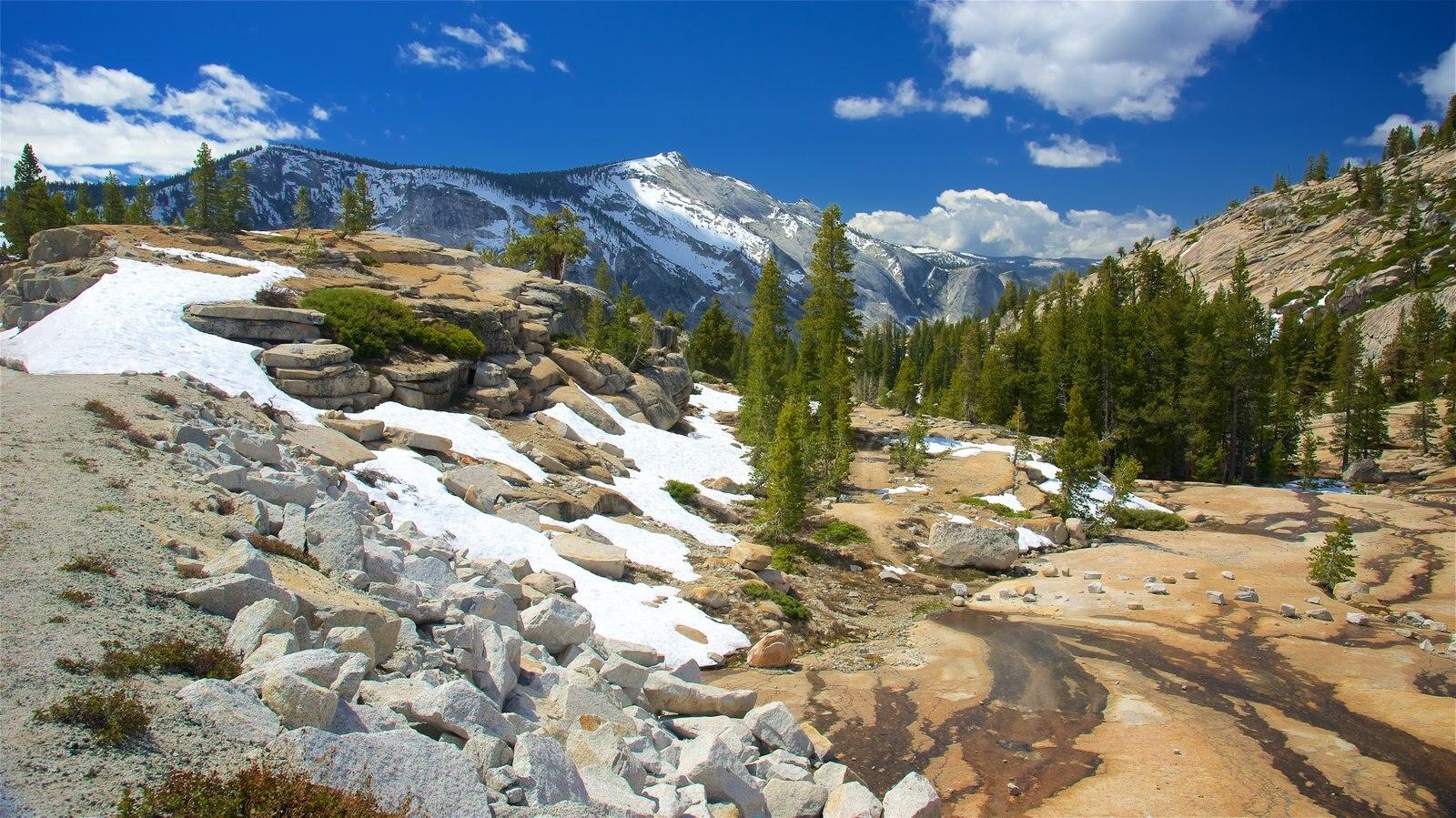Olmsted Point mostrando neve, paisagem e cenas tranquilas