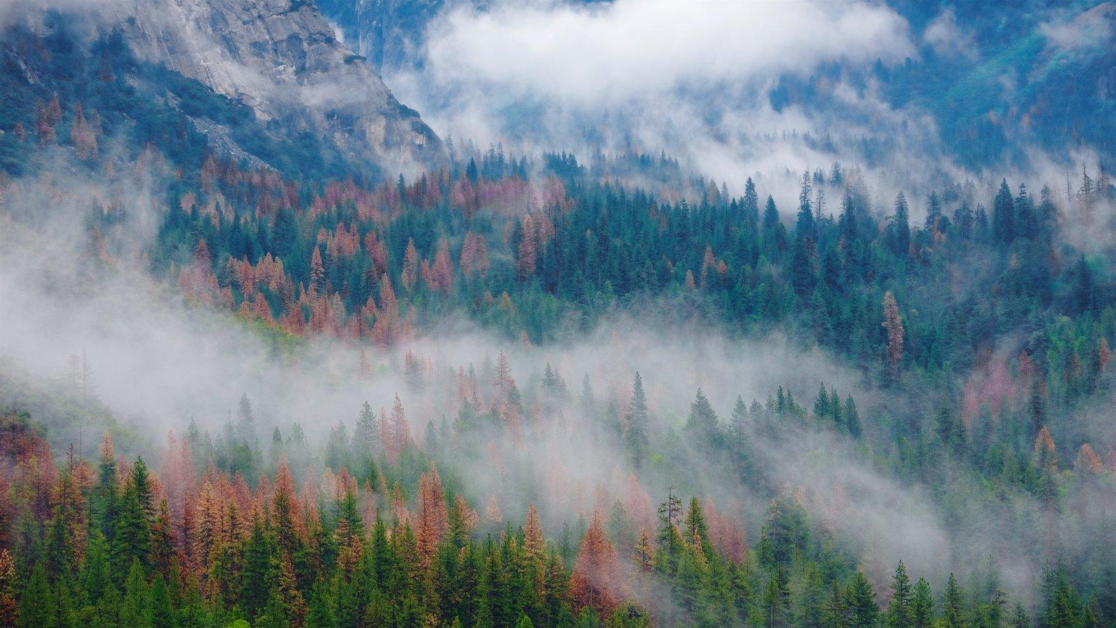 Tunnel View mostrando florestas e neblina