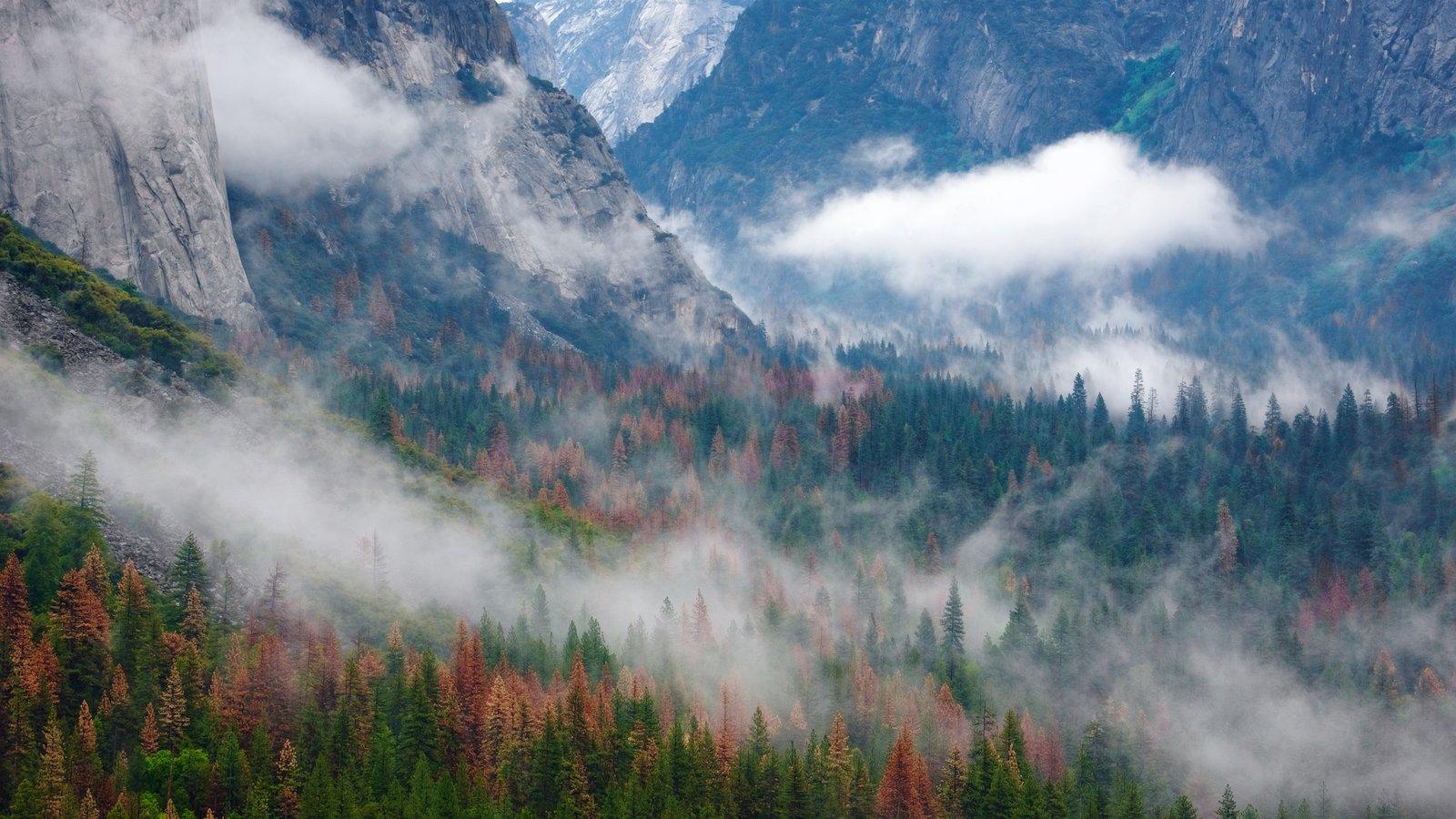 Tunnel View caracterizando neblina e cenas de floresta