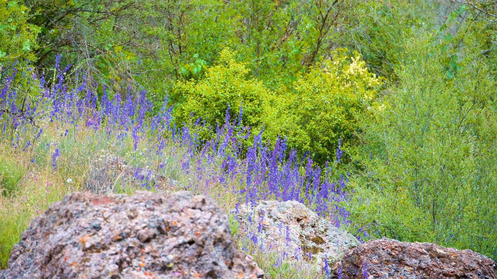 Pinnacles National Park which includes wildflowers and tranquil scenes