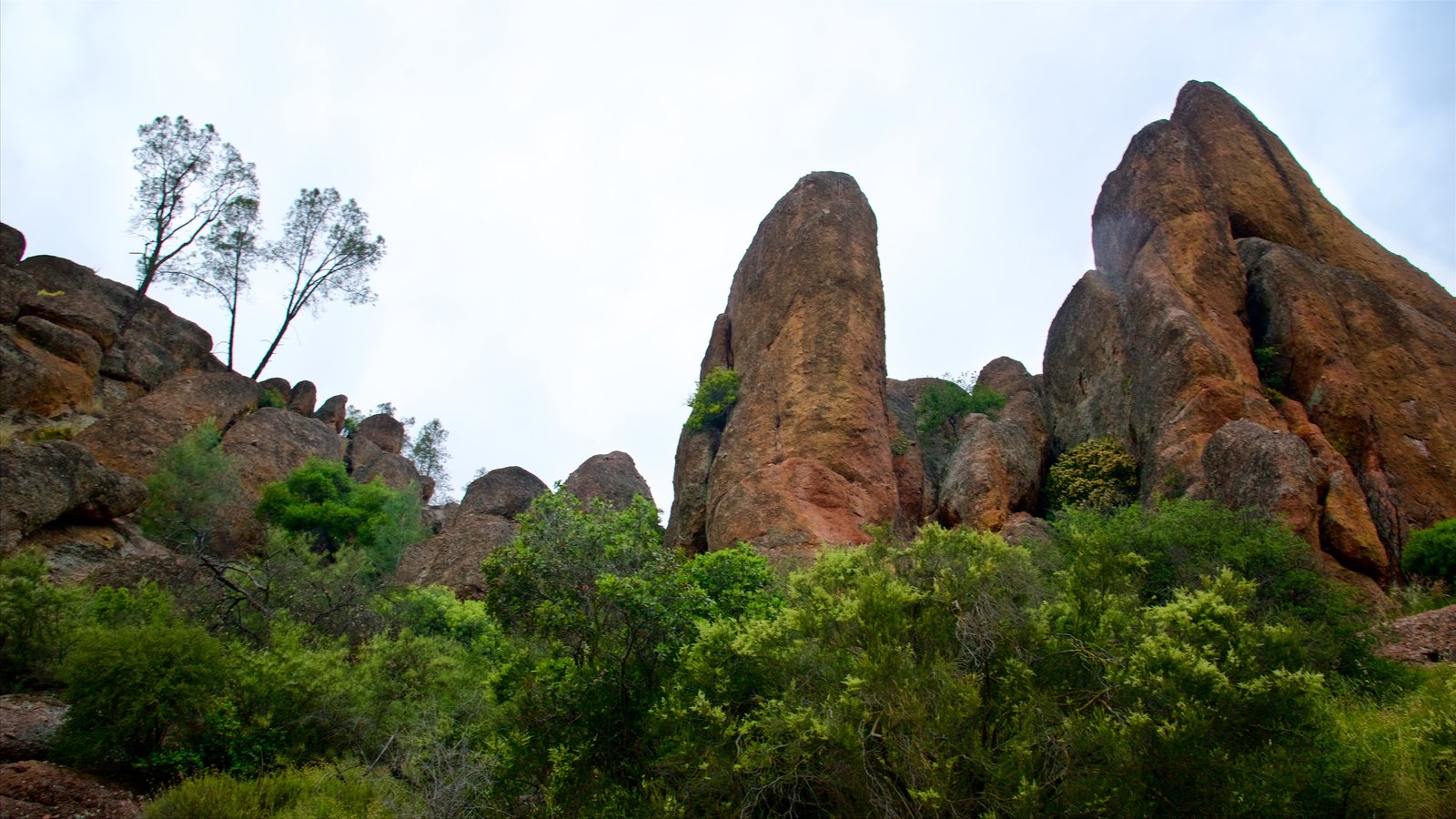 Pinnacles National Park showing tranquil scenes