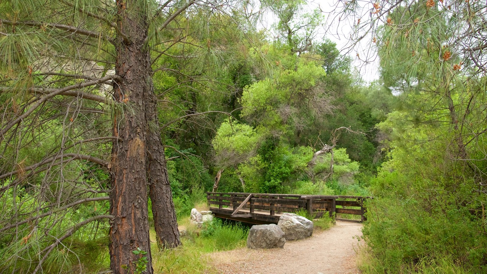 Pinnacles National Park featuring a bridge and forest scenes