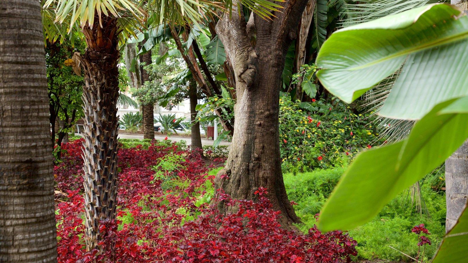 Tajo\'s Tree-Lined Avenue which includes a garden