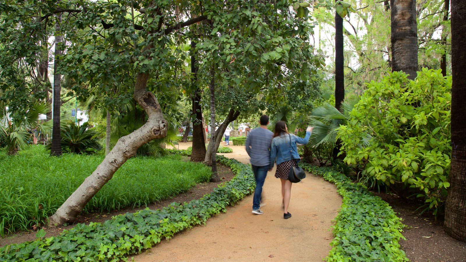 Tajo\'s Tree-Lined Avenue featuring hiking or walking and a park as well as a small group of people