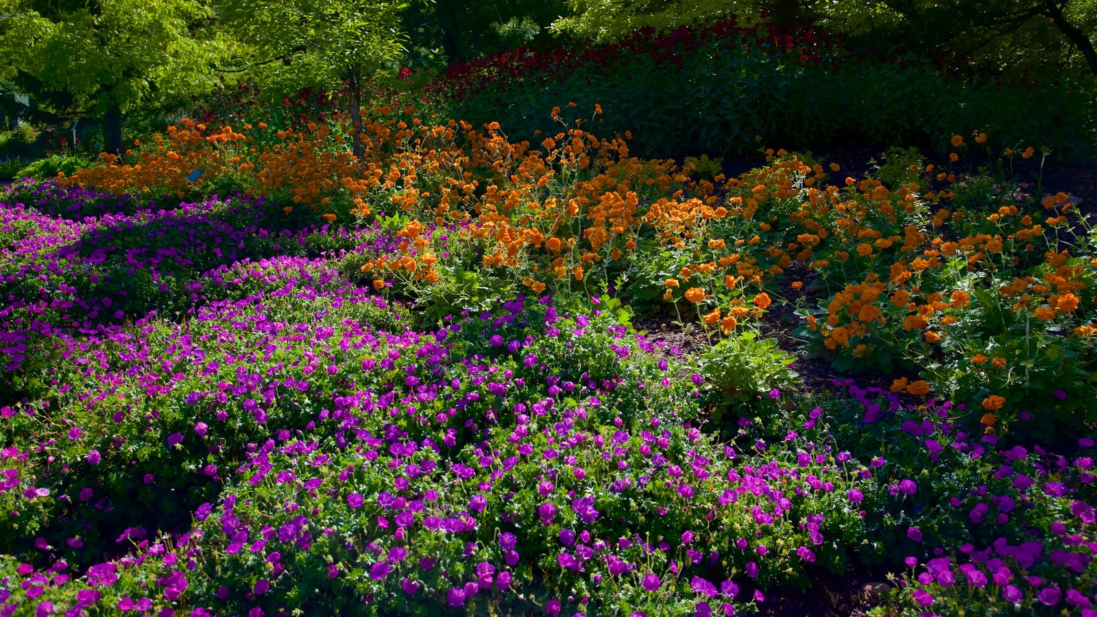 Red Butte Garden and Arboreteum showing flowers