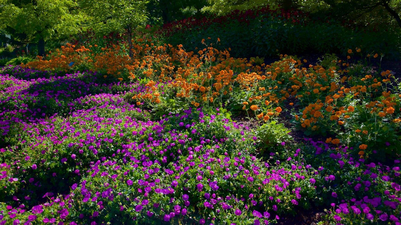 Jardín y arboretum Red Butte que incluye flores