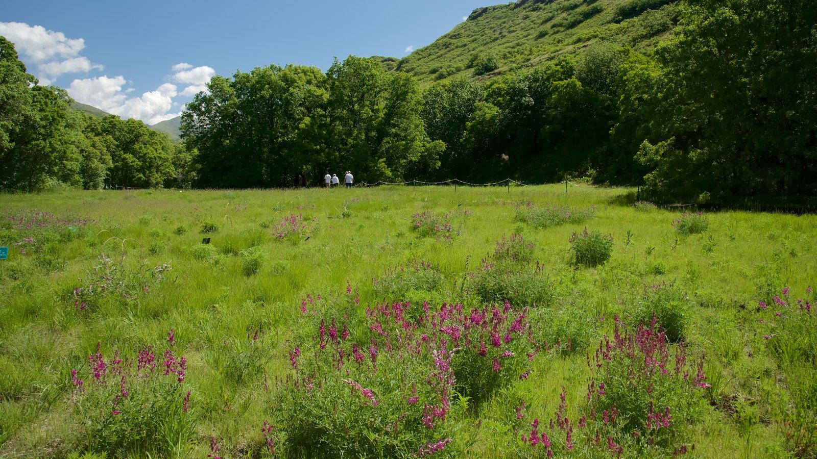 Jardín y arboretum Red Butte ofreciendo escenas tranquilas y flores