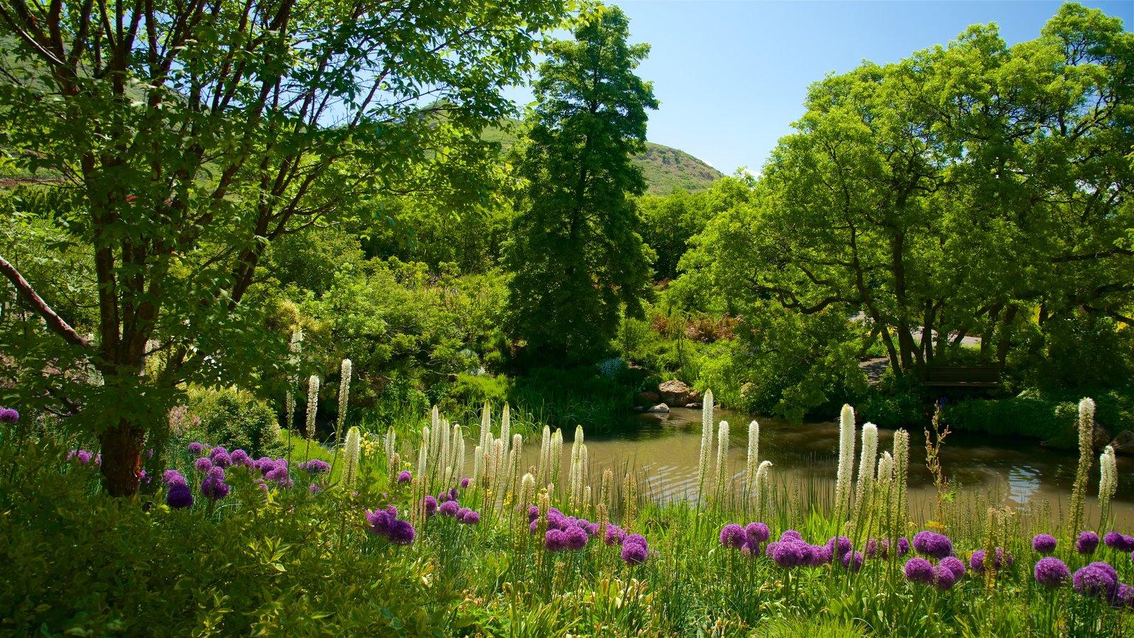 Jardín y arboretum Red Butte ofreciendo un parque, flores y un río o arroyo