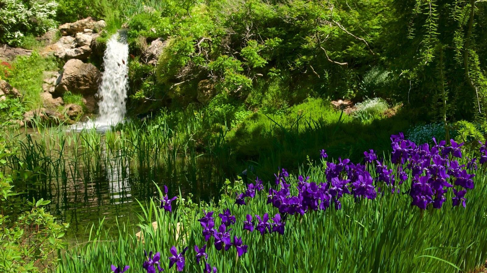 Jardín y arboretum Red Butte mostrando flores y un parque