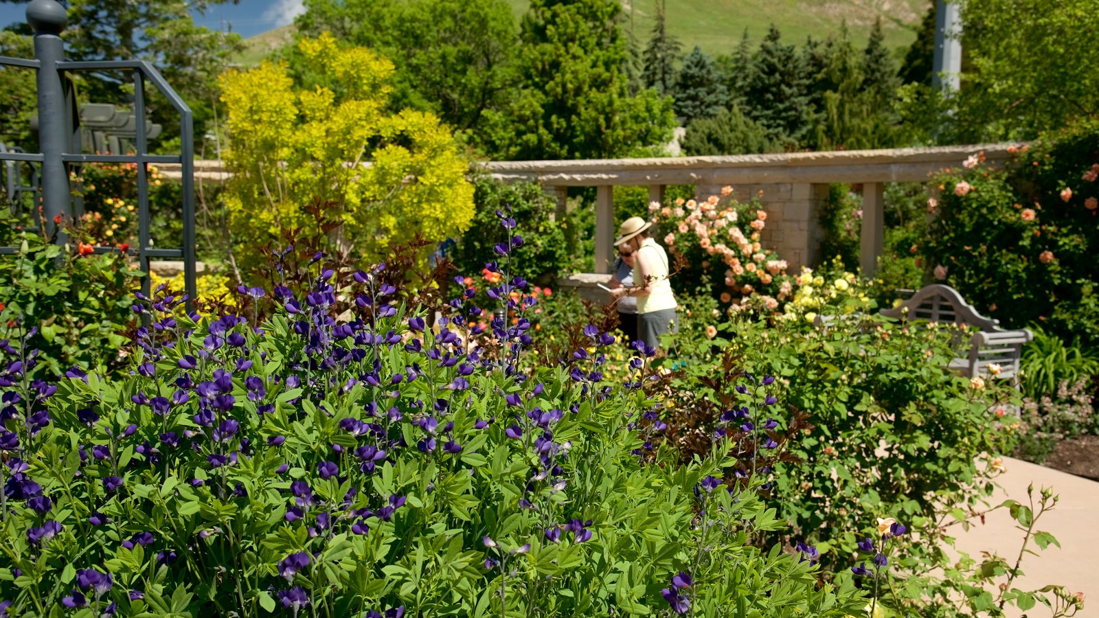 Red Butte Garden and Arboreteum which includes flowers and a park