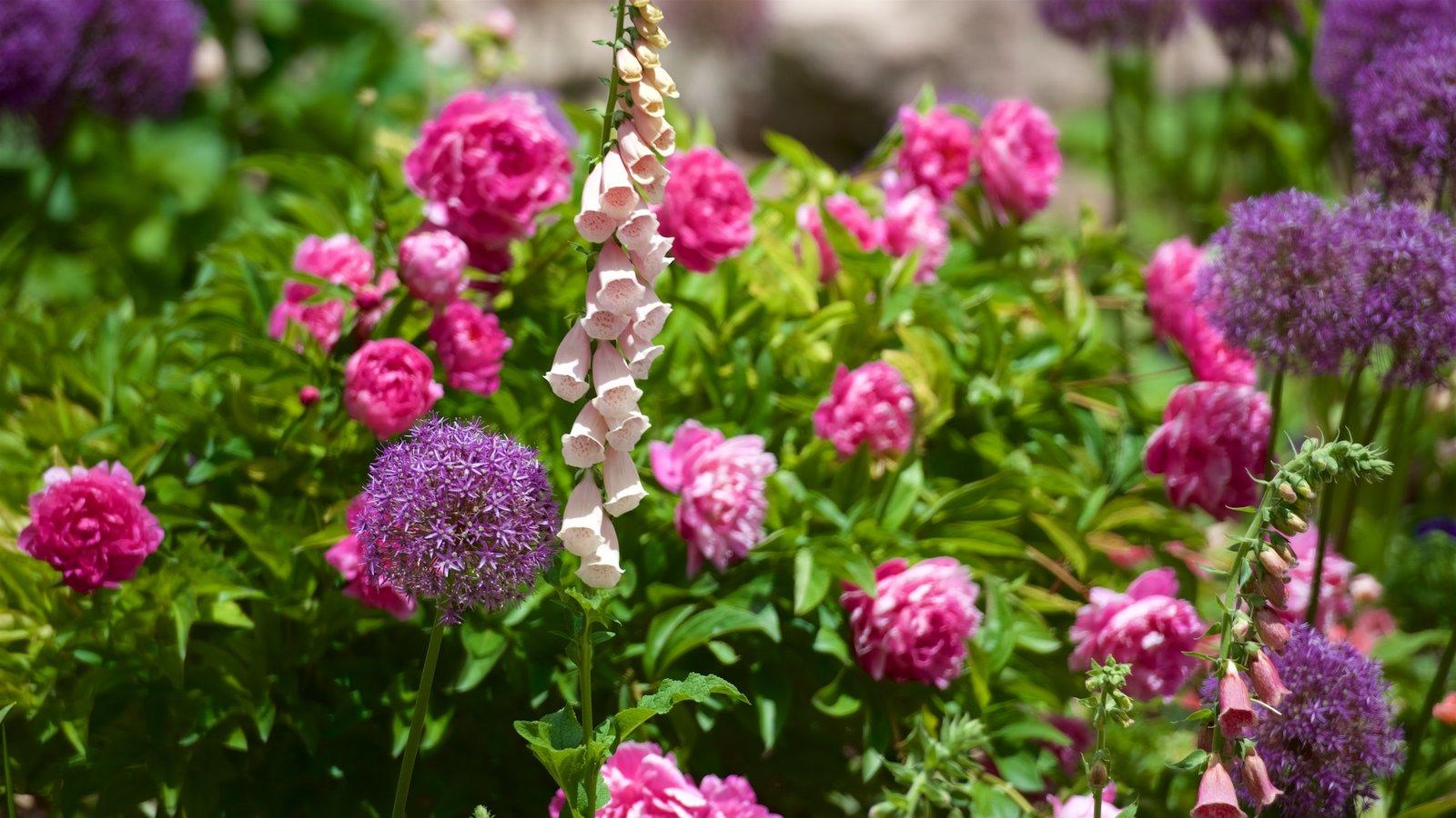 Lion House que incluye flores