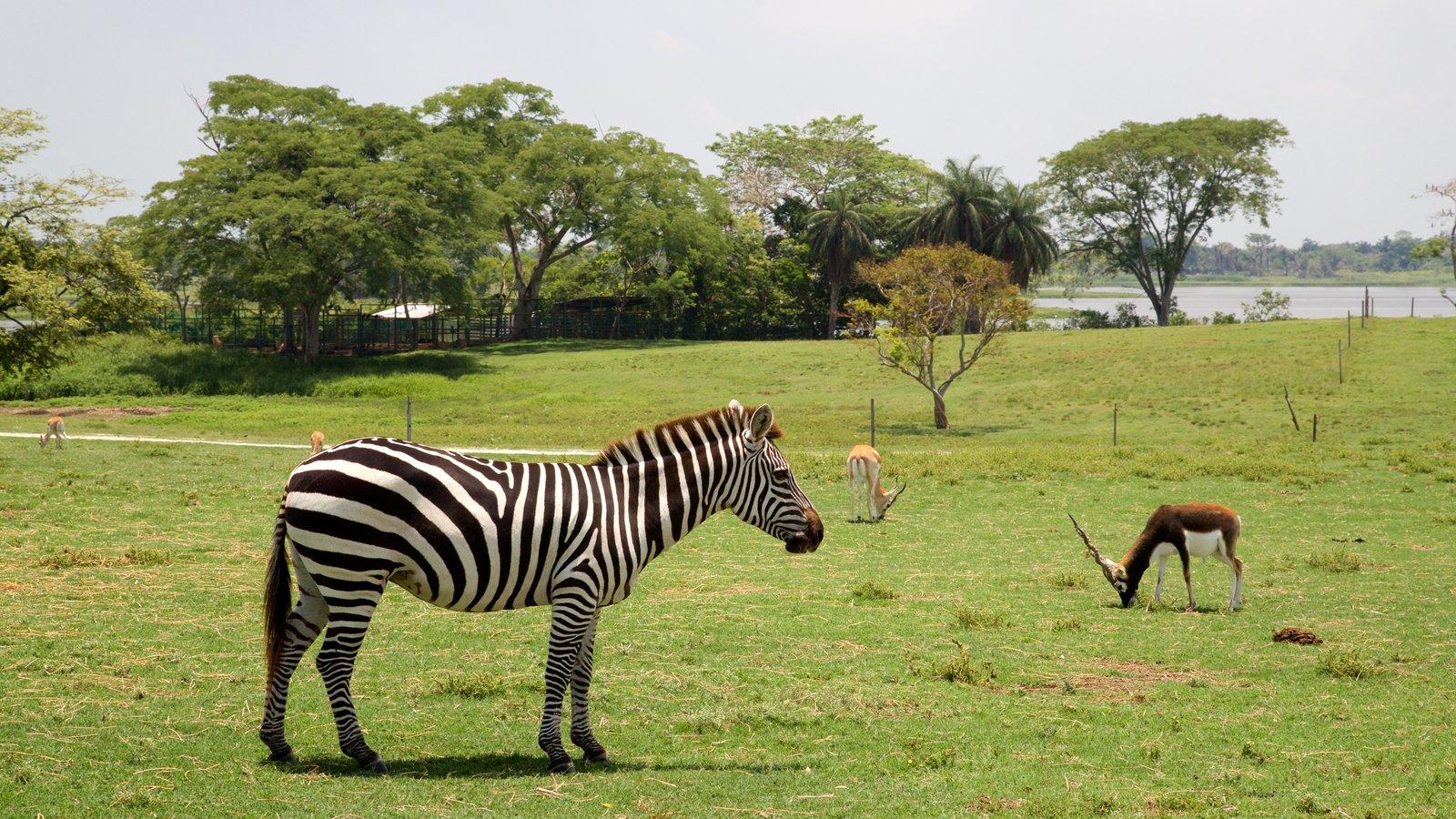 En Yumka' se estableció un zoológico tipo safari