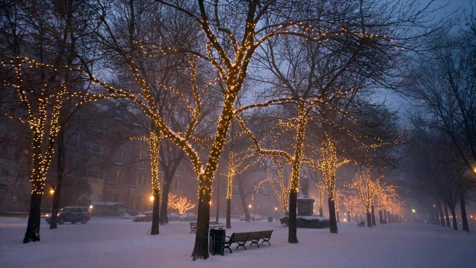 Boston que inclui cenas noturnas, neblina e um jardim