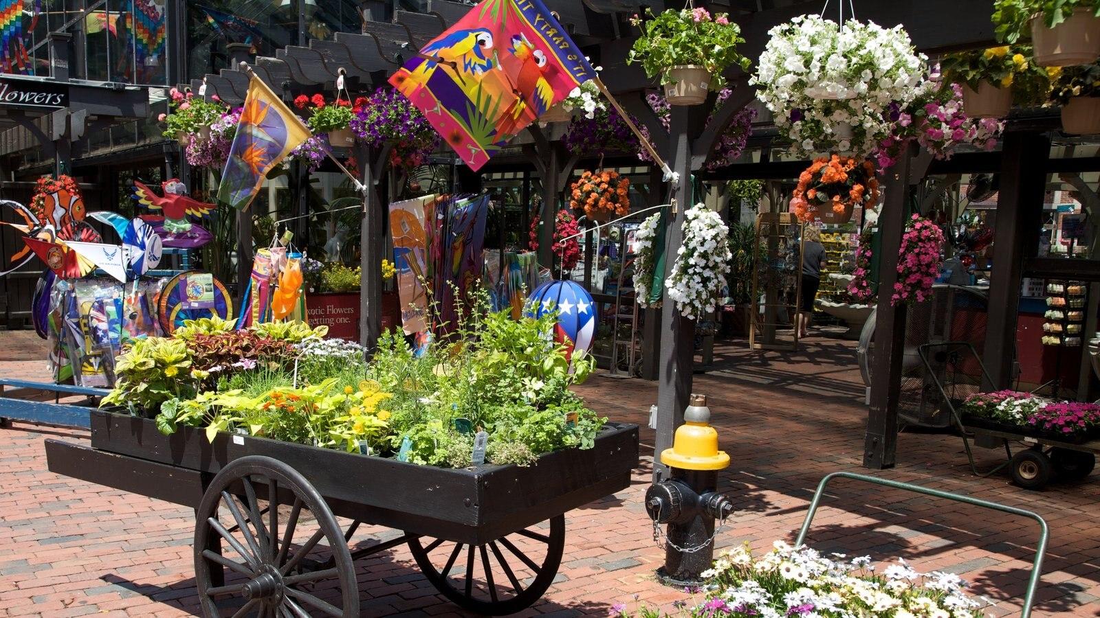 Boston mostrando flores