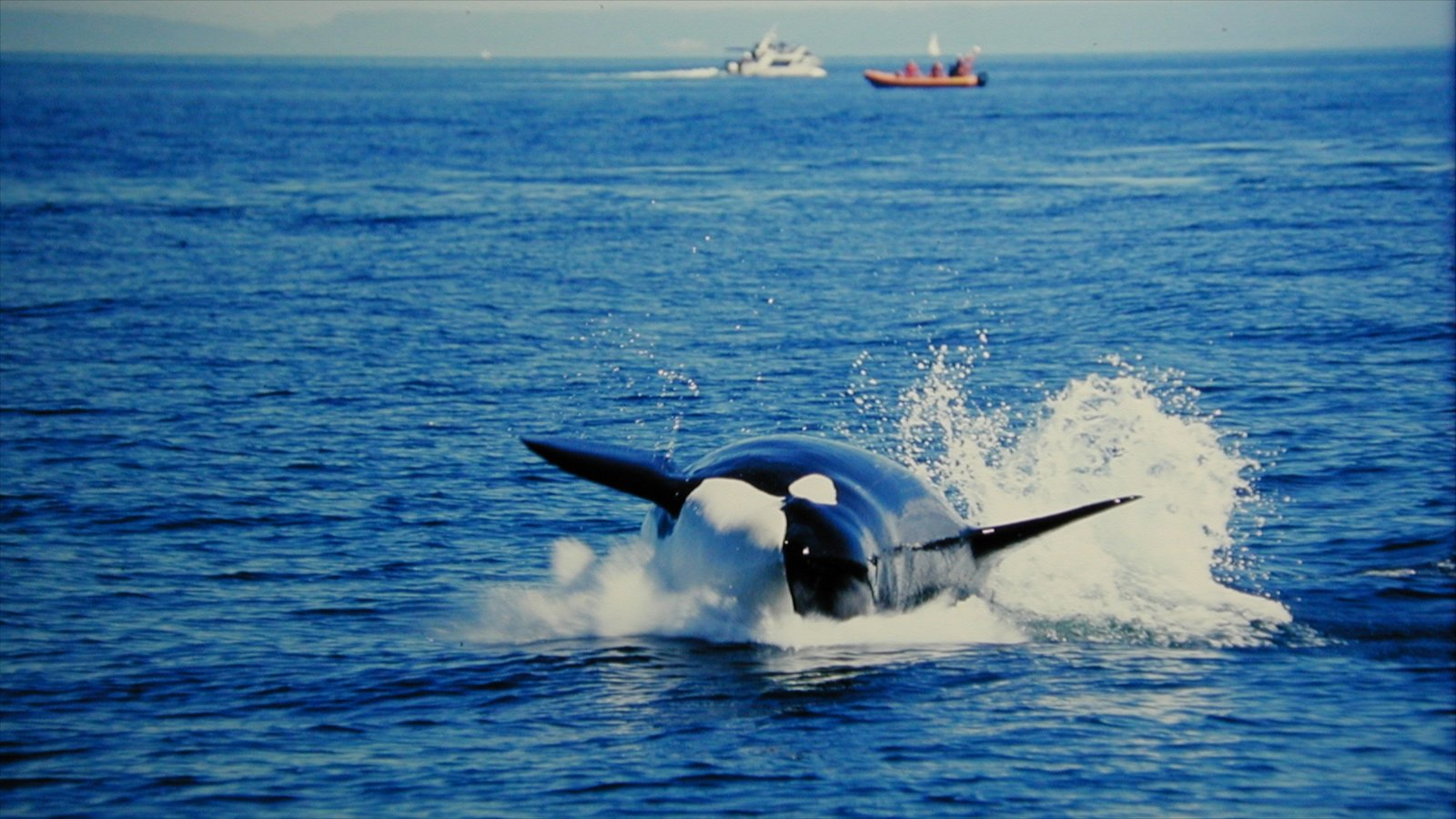 Vancouver showing whale watching, marine life and general coastal views
