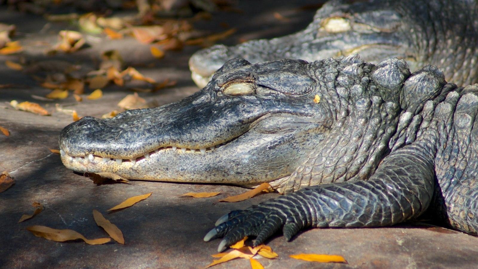 Nashville Zoo mostrando animales peligrosos y animales del zoológico
